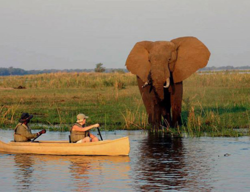 "Mobile Safari: ""Complete Lower Zambezi"" – 8 days – lodging only"