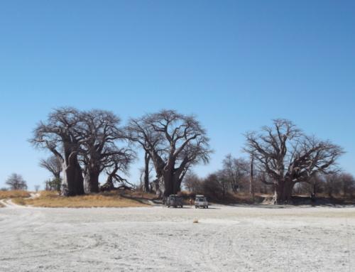 Botswana – Green & Desert – 16 days