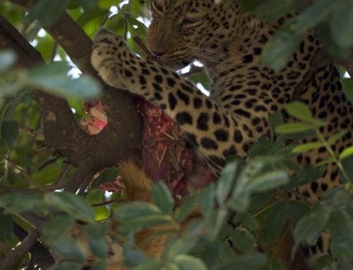Zambia – Complete South Luangwa- 9 days