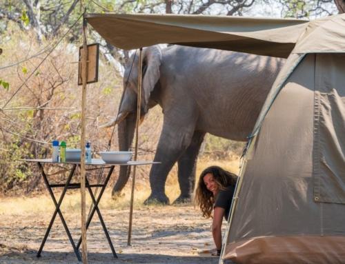 "Mobile Safari: ""Wild Desert"" – 8 days – camping only"